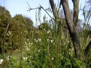 雑草から木jpeg