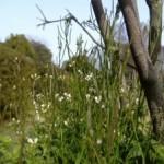 雑草から木jpeg.jpg
